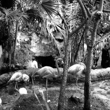 Flamingos_7045775993_l