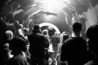 Tunnel of Light_7045787007_l