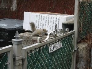 Attack Squirrel