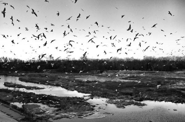 Day 117: The Birds