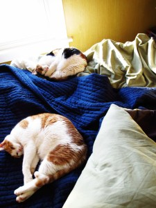 Day 81: Synchronized Cats