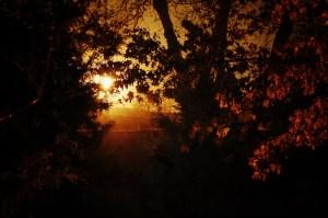 Day 94: Foggy Night