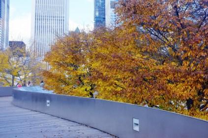 Fall Colors_8128226122_l