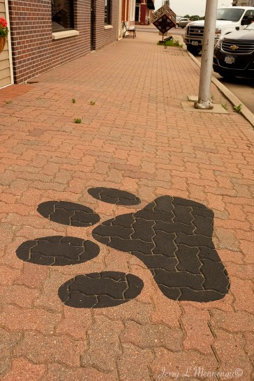 The local highschool's mascot paw print dots the sidewalks downtown in Woodbine, Iowa Friday, June 16, 2017. (photo by Jerry L Mennenga©)