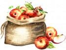 fall apples kansas city applefest autumn bucket list