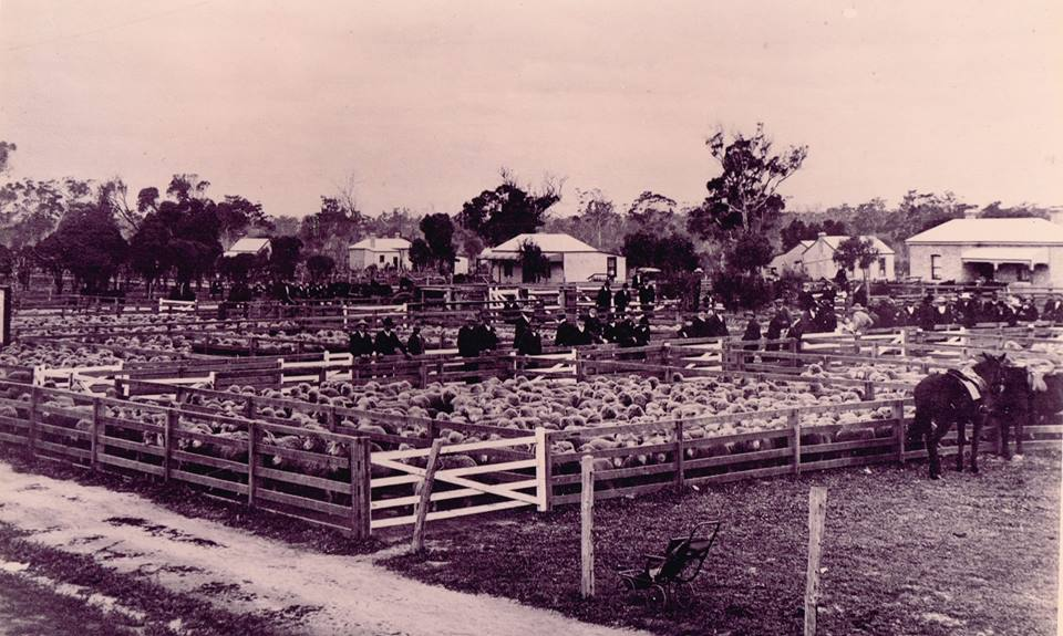 lost katanning original piesse stock and trading co sheep sale yards