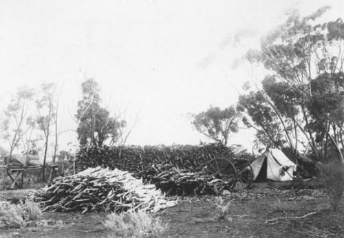 sandalwood_harvest lost katanning early history