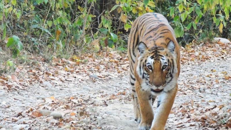 Uttrakhand Himalaya   Jim Corbett Tiger Reserve