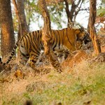 Kabini Nagarhole National Park| Few details you should know