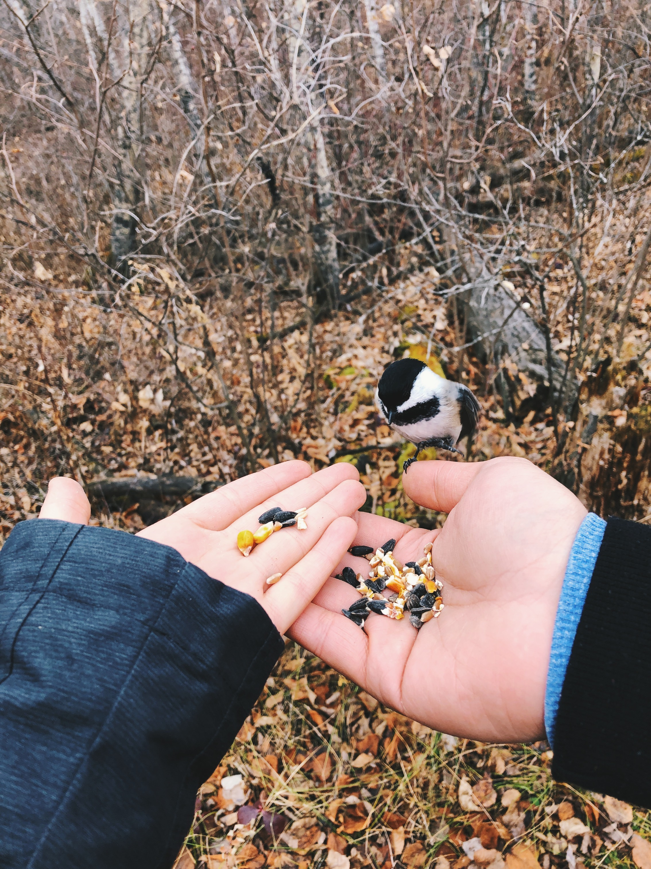 couples hands holding bird seed with a cute small bird sitting on mans hand