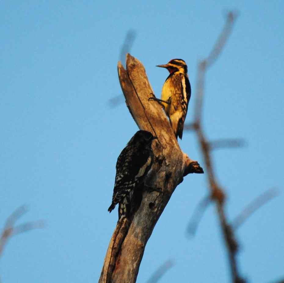 Birds of Little Piney Bastrop TX