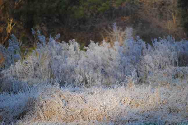 Gray Palette of Winter