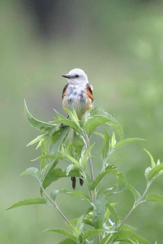 Birds from Little Piney Bastrop TX
