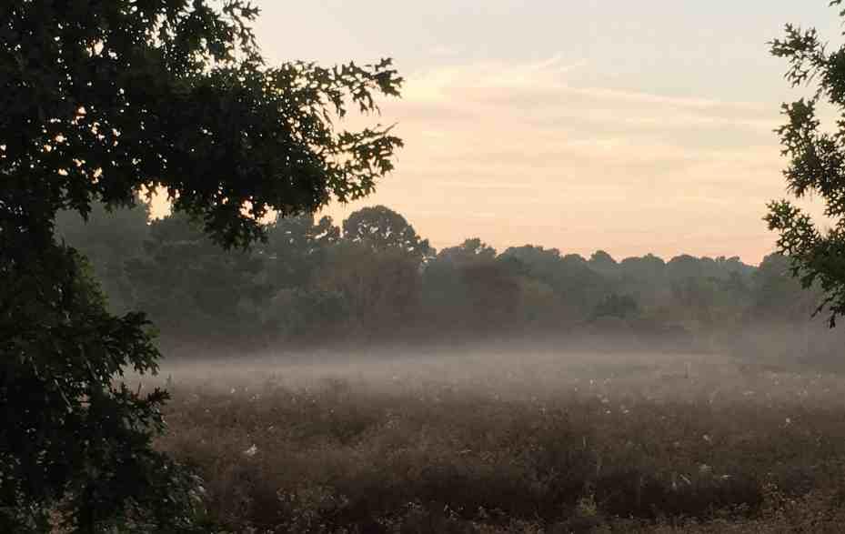 MagicalMagical morning at Little Piney Bastrop birding