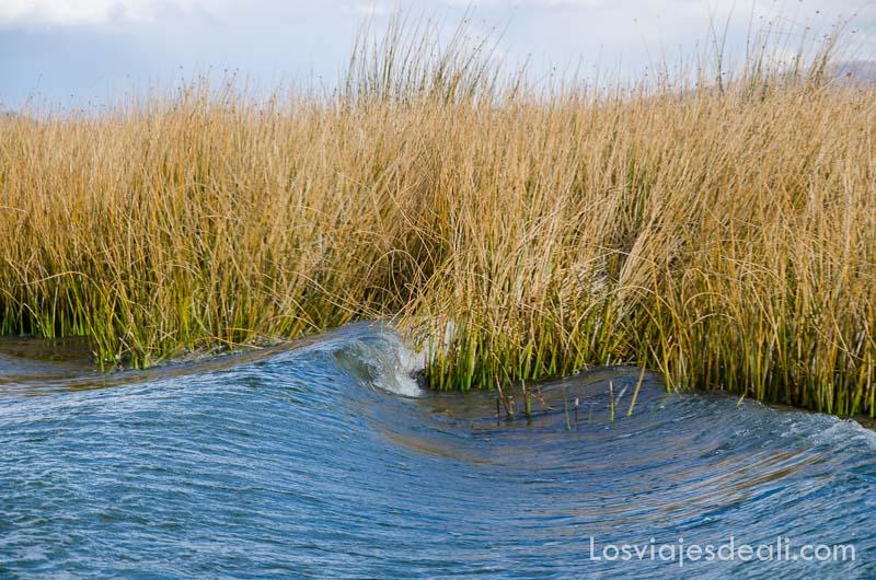 agua ondulante entre las plantas acuáticas de las islas del lago titicaca