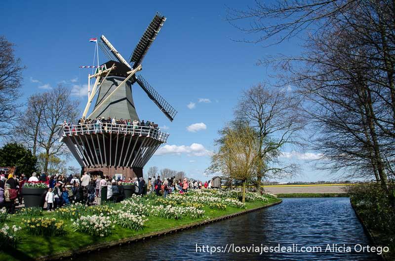 molino holandés junto a un canal y cielo muy azul