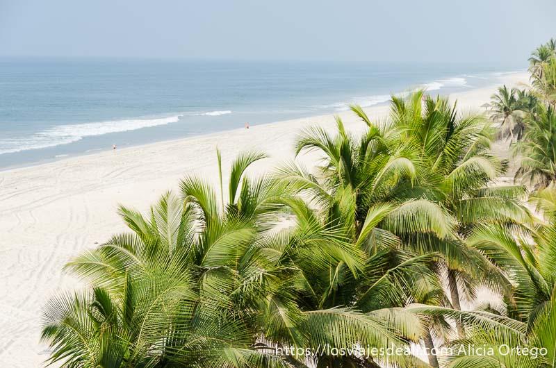 palmeras y playa de arena blanca