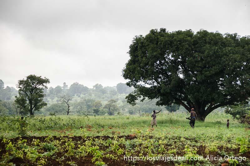 campos somba con grandes árboles y una pareja trabajando en ellos