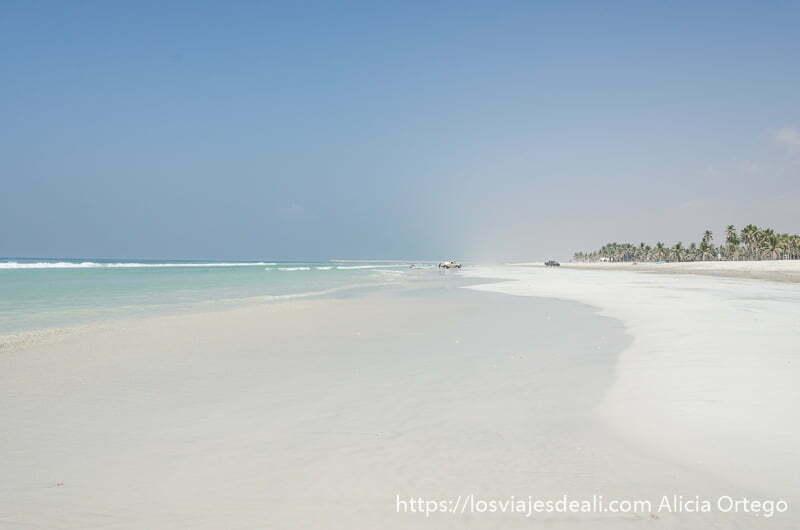 playa larguísima de arena blanca y desierta y palmeras a la derecha visitas que hacer cerca de Salalah