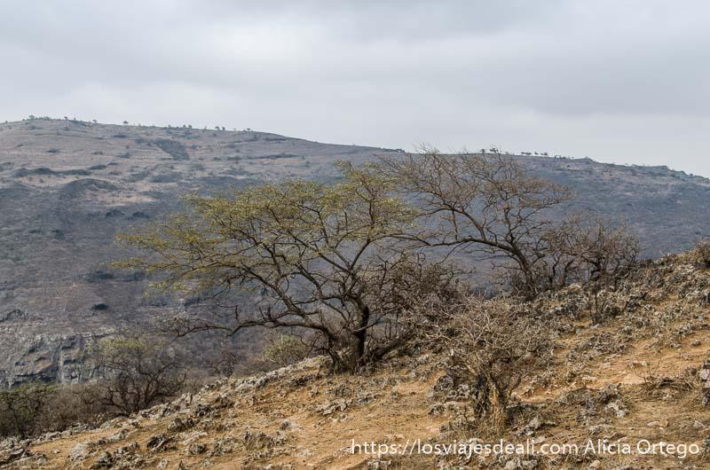 árbol seco en ladera de montaña con nubes en el cielo visitas que hacer cerca de salalah