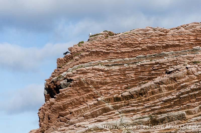 acantilado de flysch como cortado en mil capas con cielo con nubes y una gaviota en lo alto