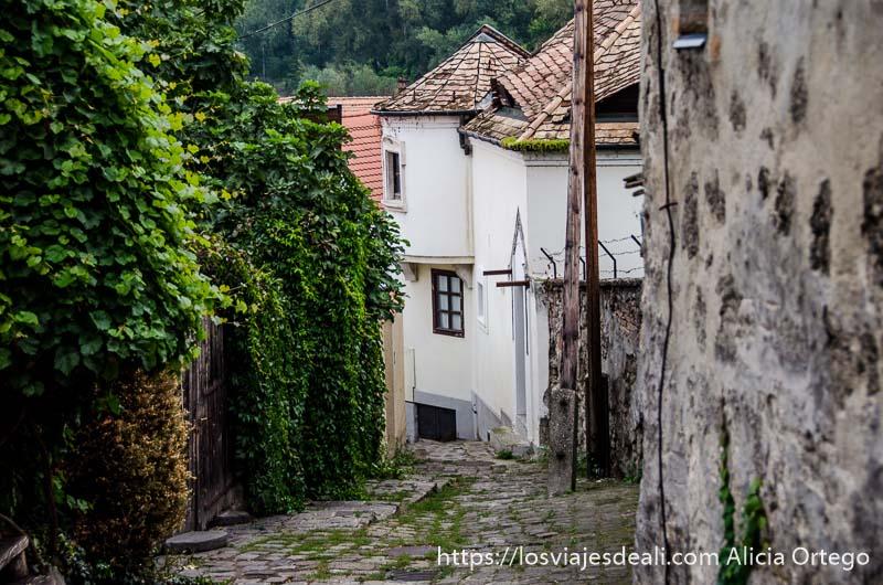 calle de bajada con muro lleno de enredaderas verdes y casas blancas al fondo en szentendre