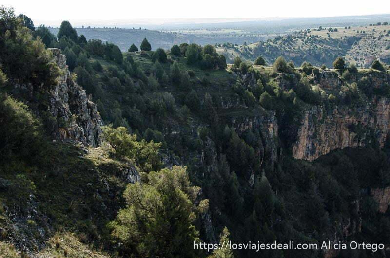 paredes de roca cubiertas de bosque bajo en las hoces del duratón