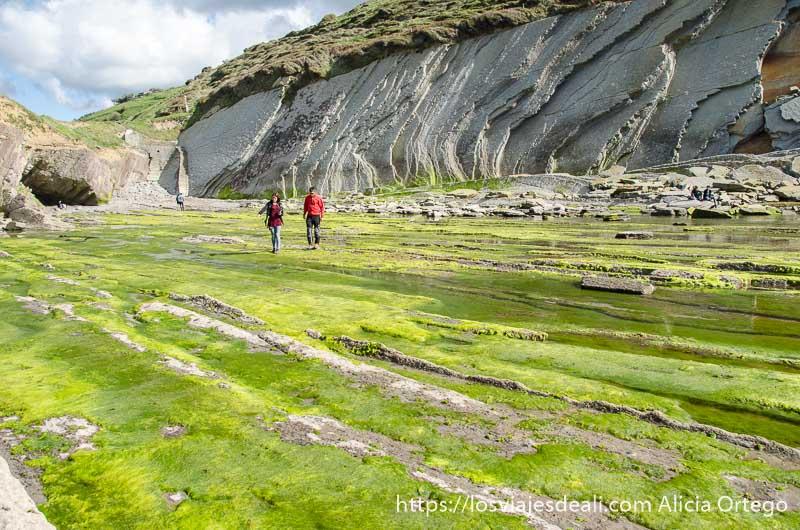 pareja andando por la superficie de las rasas cubiertas de algas aprovechando marea baja en playa de algorri