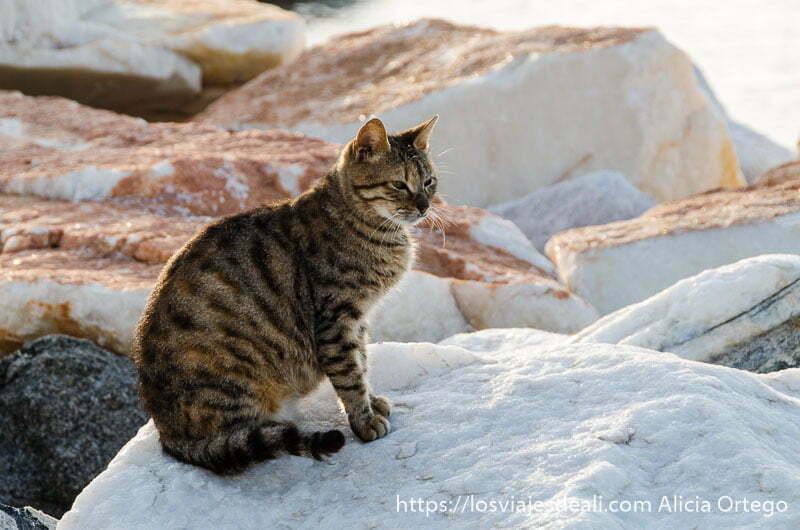 gato atigrado sobre rocas de mármol en la capital de naxos