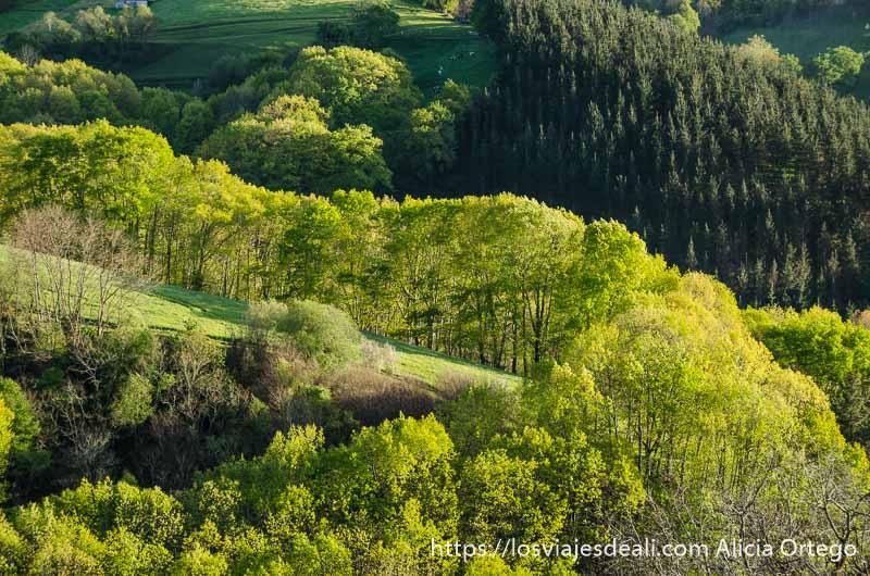 monte con bosques y prados verdes qué ver en getaria y alrededores