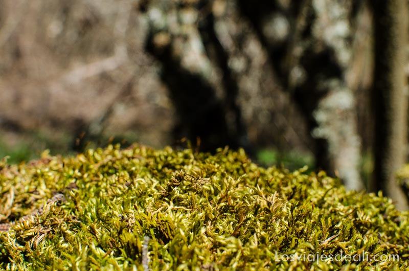 musgo verde haciendo senderismo fácil en la sierra de madrid