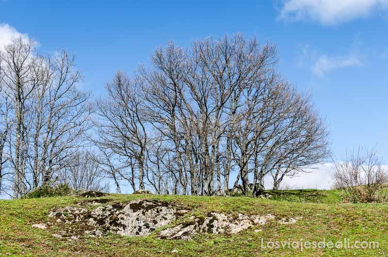 grupo de árboles sin hojas sobre cielo azul senderismo fácil en la sierra de madrid