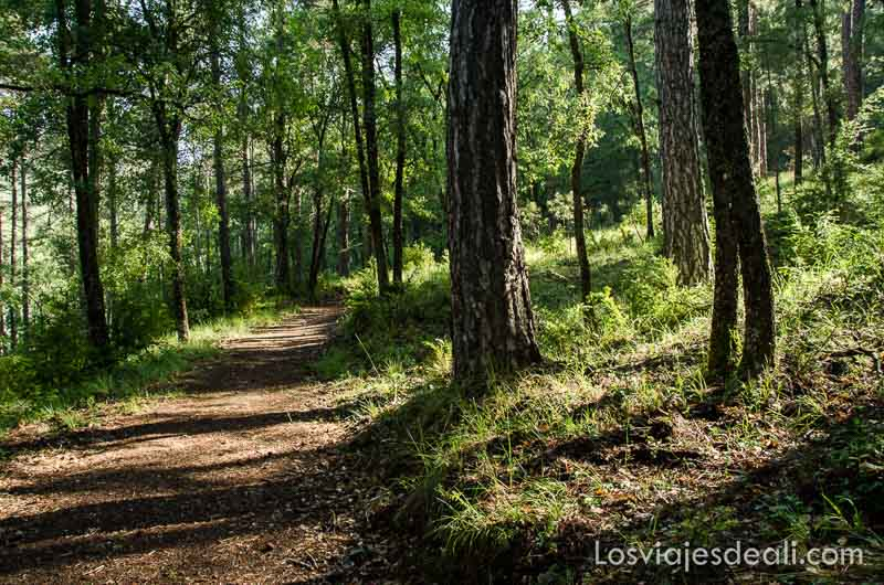 camino en el bosque con luz de la mañana entre los árboles qué ver en la provincia de cuenca