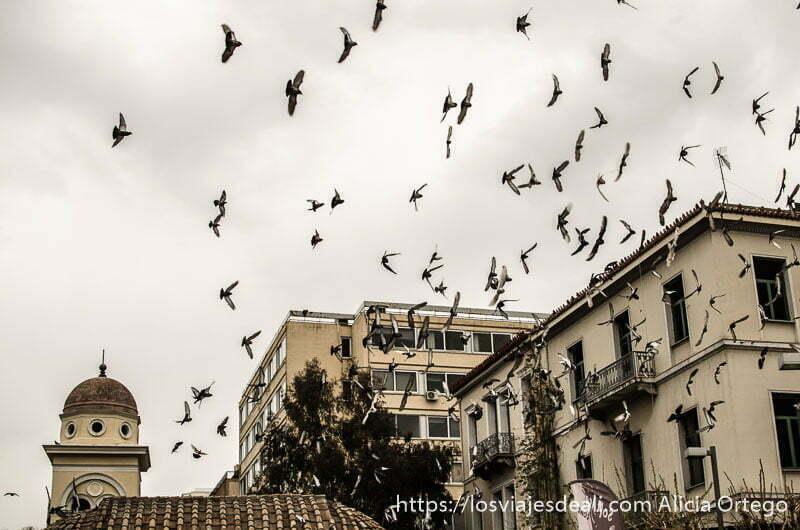 bandada de palomas volando sobre edificios  y campanario con cielo nublado