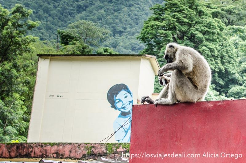 mural de un niño sonriente y un babuino al lado subido a un muro rojo en rishikesh