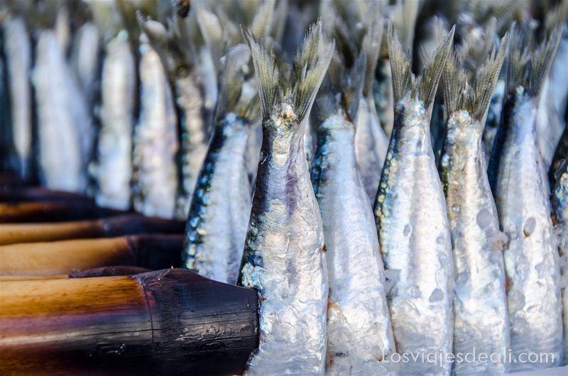sardinas ensartadas en palos para poner sobre las brasas
