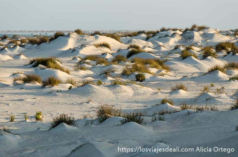 dunas de color blanco con matorrales a la luz del amanecer desiertos de omán