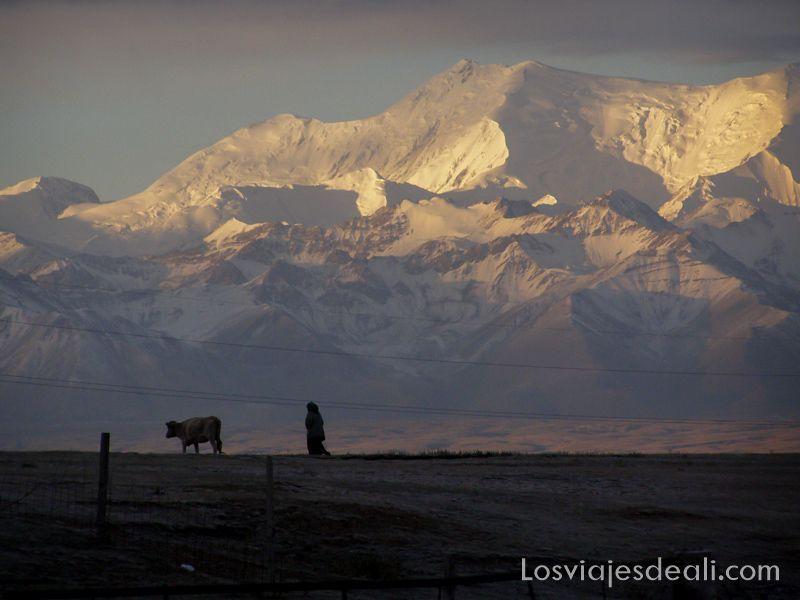 montañas Pamir iluminadas por el sol del amanecer y una mujer con pañuelo en la cabeza andando por el campo detrás de una vaca consejos para evitar el mal de altura