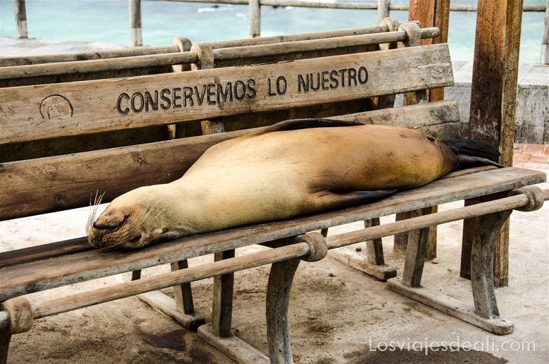 león marino en islas galápagos
