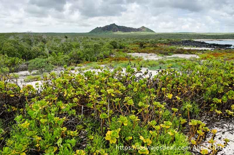 vegetación entre arena blanca y con volcán al fondo isla san cristóbal galápagos