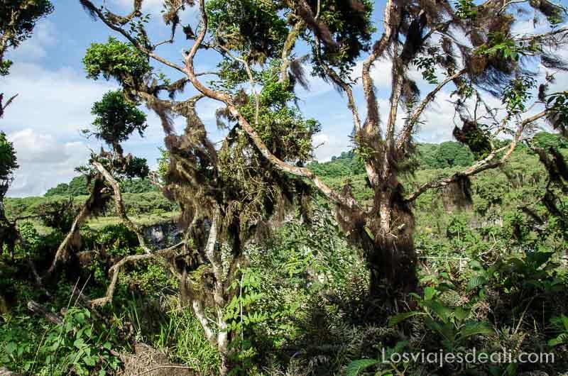 fauna y flora de galapagos arboles
