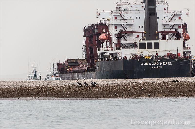 un carguero atracado en la playa y tres pelícanos delante