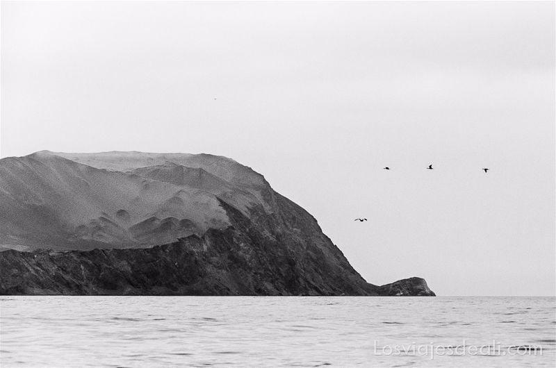 isla sobre horizonte de mar y tres aves en fila volando al lado