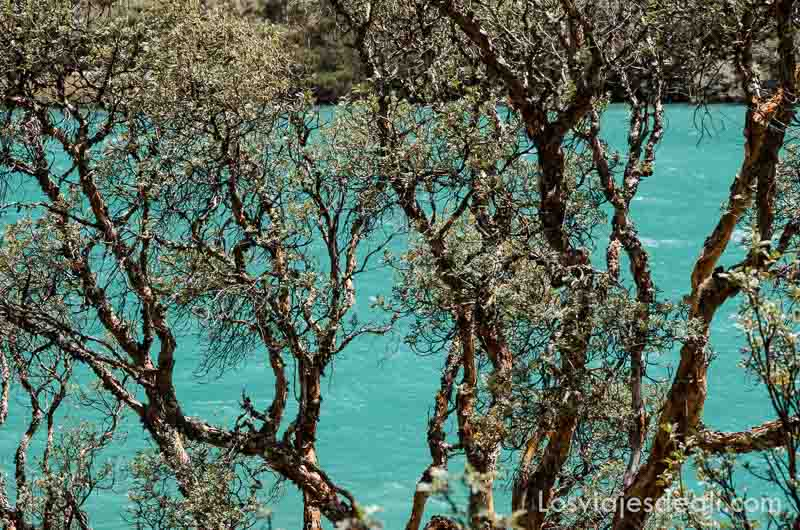 parque nacional de huascaran árboles