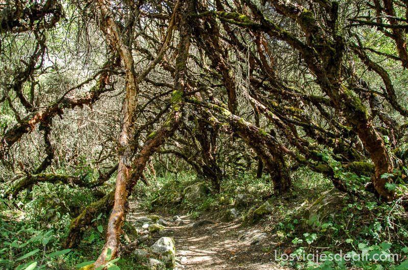 parque nacional de huascaran sendero bosques