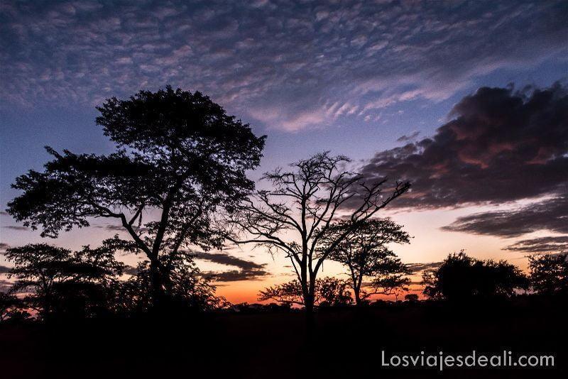 amanecer en el serengueti con acacias contrastando con el cielo azul, rojo y violeta por qué viajar a África