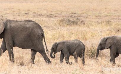 visita al parque nacional Serengueti