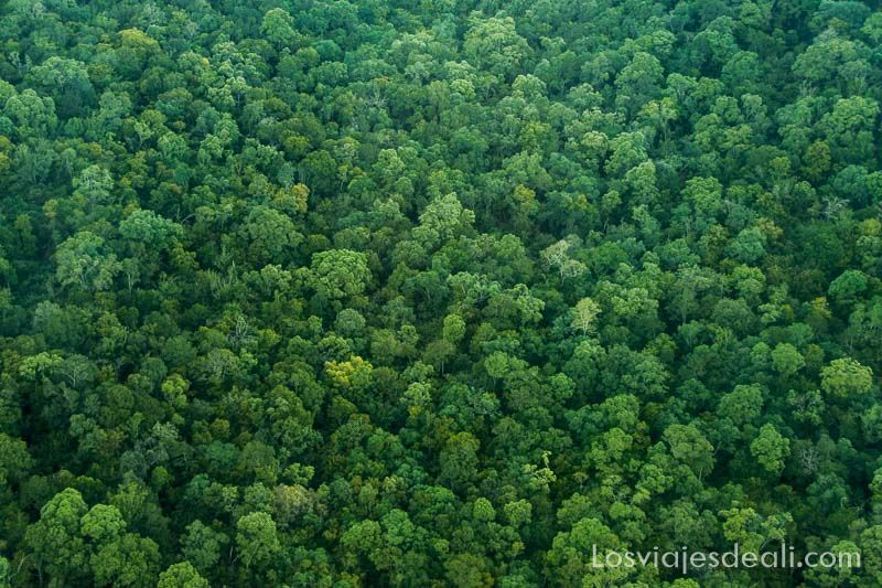 dos días en masai mara bosques kenia