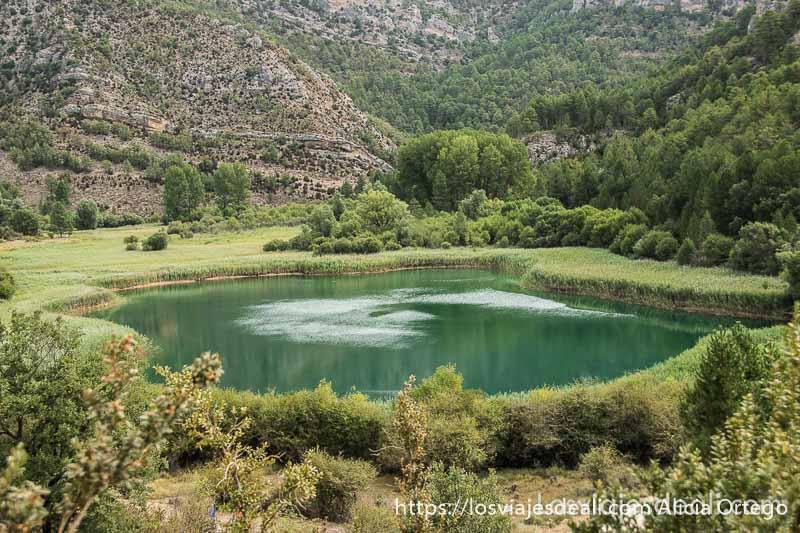 laguna de taravilla rodeada de juncos verdes