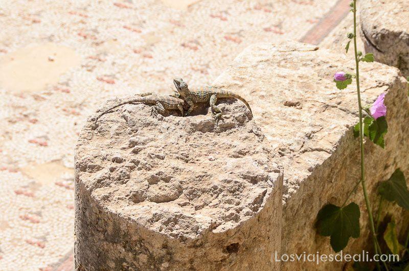 dos lagartijas sobre una columna rota
